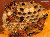 262018.wasp-nest-2