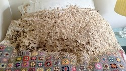 282085.wasp-nest-on-bed-sept14
