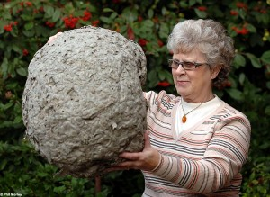 373571.giant-wasp-nest