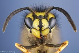 591230.wasp---face-on