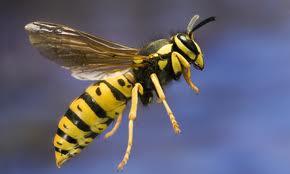 713063.wasp-3