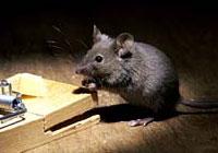 806974.mice