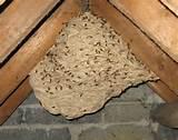 871303.wasp-nest-4