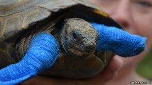 mrsT-tortoise
