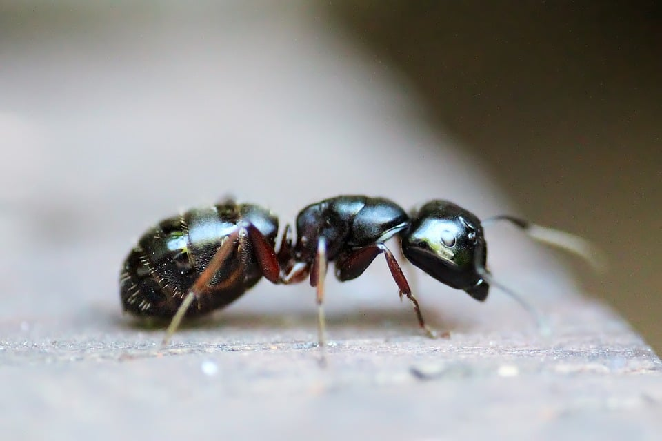 ant problems Clacton