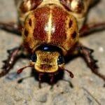 pest control felixstowe, cockroach
