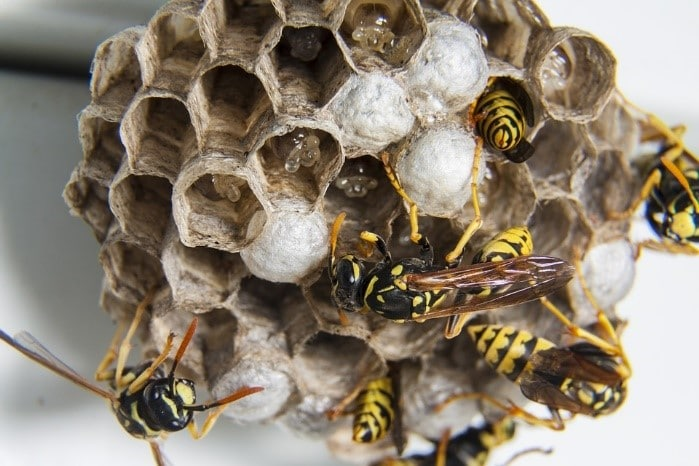 business pest control Brentwood, wasp's nest removal Essex