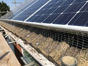 bird proofing solar panels ipswich