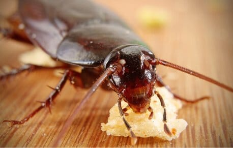 Colchester Pest Control