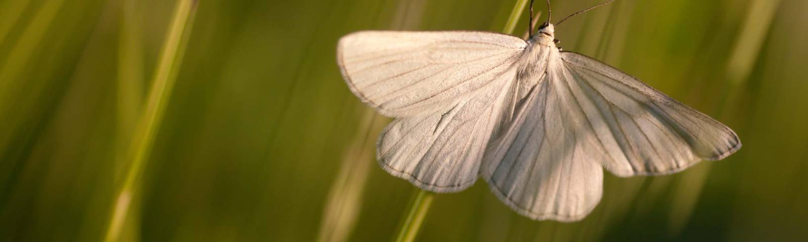 Moth Pest Control in Essex & Suffolk