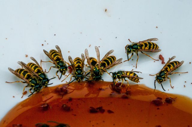 Wasp Nest Removal Colchester