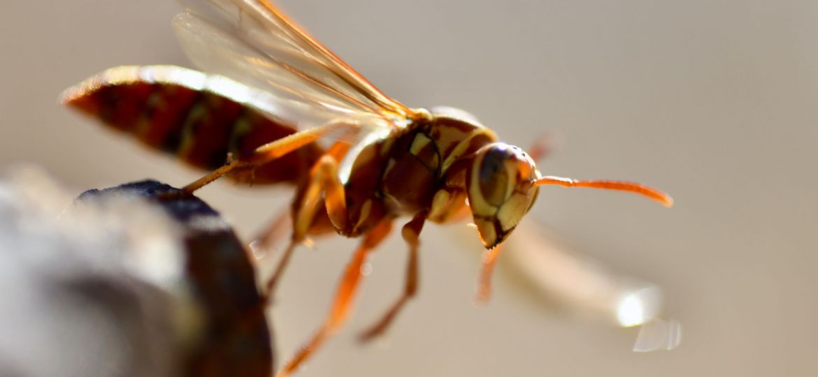 wasps ruin your summer